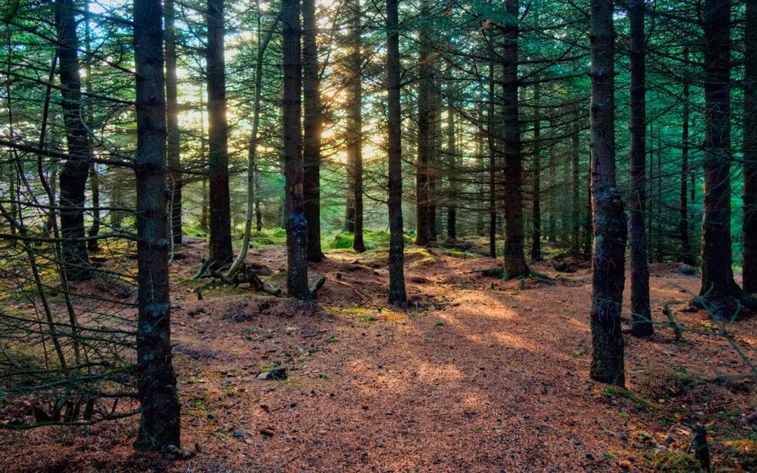 Wald- & Naturlehrer
